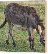 Full Grown Donkey Grazing Wood Print