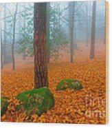Full Of Autumn Wood Print