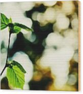 Full Of Life 9 Wood Print