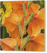 Full Stem Gladiolus Wood Print