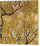 Full Yellow Wood Print