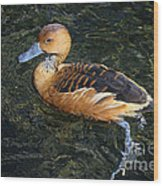 Fulvous Whistling Duck Wood Print