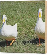 Fun Ducks Wood Print