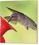 Fun Summer Hummingbird Wood Print