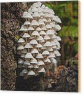 Fungal Gathering Wood Print
