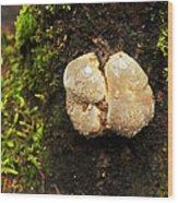 Funghi Wood Print