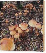 Fungi Forest Wood Print by Steven Valkenberg