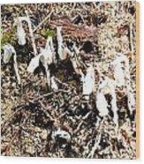 Fungi Fronds Wood Print