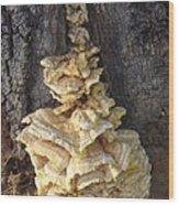 Fungi On Oak Wood Print