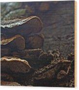 Fungus 11 Wood Print