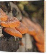 Fungus 2 Wood Print