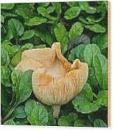 Fungus Among The Ajuga Wood Print