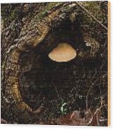 Fungus In A Knothole Wood Print