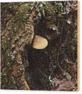 Fungus In Stump Hole Wood Print