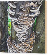 Fungus Invasion Wood Print