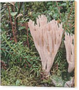 Fungus On Forest Floor Alaska Wood Print
