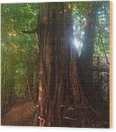 Fungus Tree Wood Print