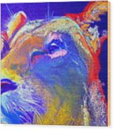 Funky Lioness Jungle Queen Wood Print