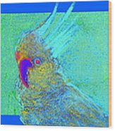 Funky Sulphur Crested Cockatoo Bird Art Prints Wood Print