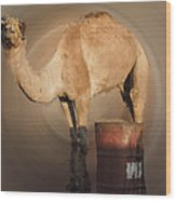 Funny Beduin Camel Talk  Wood Print