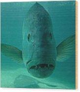 Funny Fish Face Wood Print
