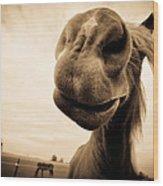 Funny Horse Sepia Wood Print by Paulina Szajek