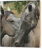 Funny Horses Wood Print
