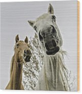 Funny Horses Wood Print by Cindy Bryant
