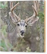 Funny Mule Deer Buck Portrait With Velvet Antler Wood Print