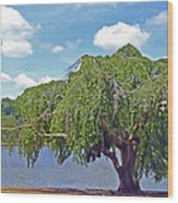 Furman Tree And Tower Wood Print