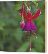 Fuschia Flower Wood Print by Ron White