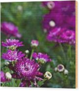 Fuschia Mums 2  Wood Print