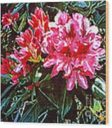 Fuschia Rhododendrons Wood Print
