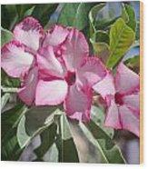 Fushia Oleander Near Phoenx Arizona 2 Wood Print