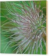 Fuzzy Flower Wood Print by Sarah Crites