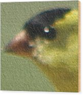 Fuzzy Gold Finch Wood Print
