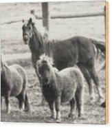 Fuzzy Ponies Wood Print
