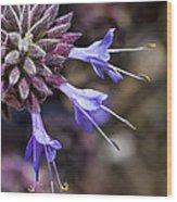Fuzzy Purple Detail 2 Wood Print