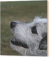 Fuzzy Whiskers Wood Print