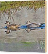 Gadwall Pair Swimming Together Wood Print