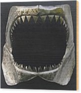 Gaint Shark Jaw Sculpture Wood Print by Stuart Peterman