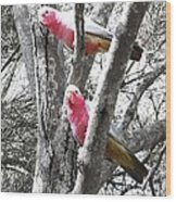 Galahs In A Tree Wood Print