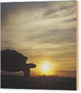 Galapagos Giant Tortoise At Sunrise Wood Print