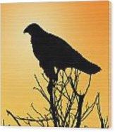 Galapagos Hawk Wood Print