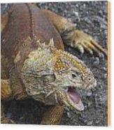 Galapagos Land Iguana Wood Print