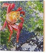 Galapagos Sally Lightfoot Crab Wood Print