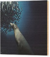 Galapagos Sea Lion Pup Fishing Wood Print