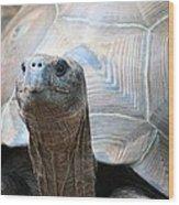Galapagos Tortoise 1 Wood Print