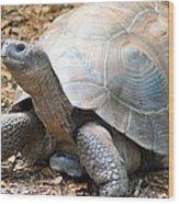 Galapagos Tortoise 2 Wood Print