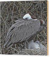 Galapagos - Watchful Pelican Wood Print